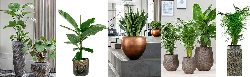 Baq gouden plantenpot
