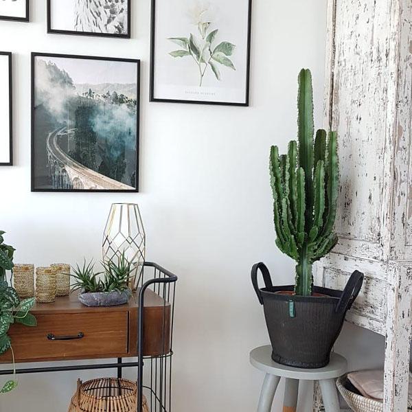 90 - 150 cm planten