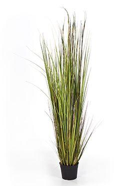 Bamboo gras