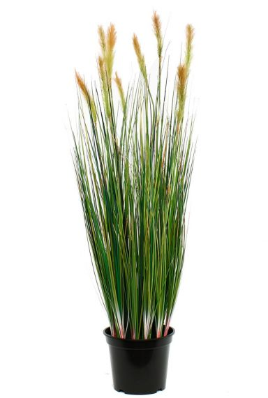 Mooie gras zijdeplant kopen bij 123planten