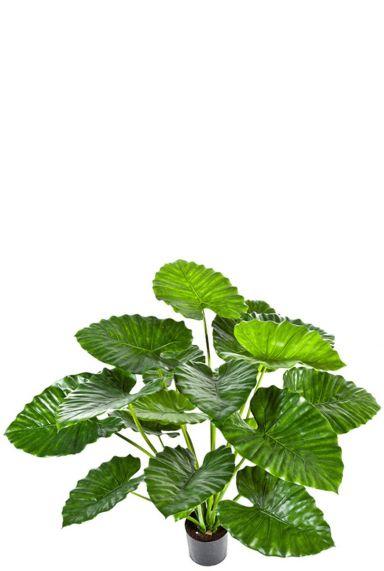 Alocasia calidora zijdeplant
