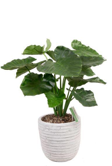 Alocasia kunstplant in pot 1