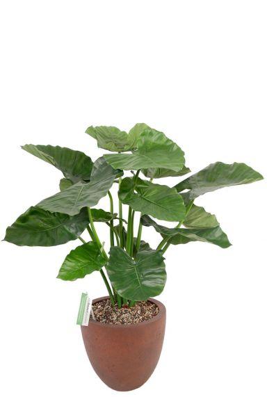 Alocasia kunstplant in pot 2