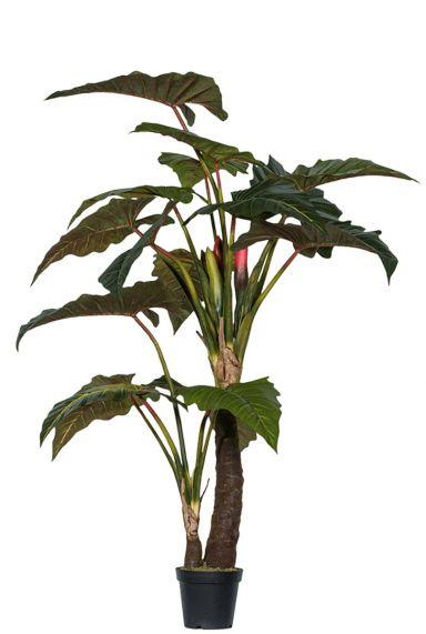 Alocasia plant zijdeplant