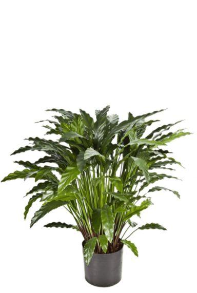 Calathea kunstplant