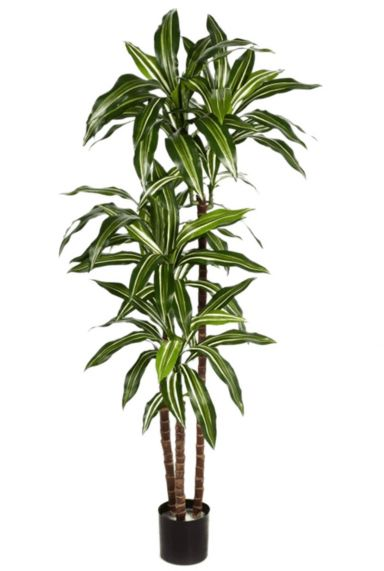 Dracaena kunstplant