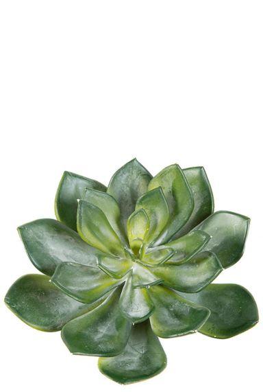 Echeveria vetplant kunst