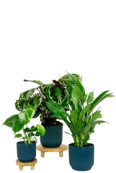 Elho potten en planten