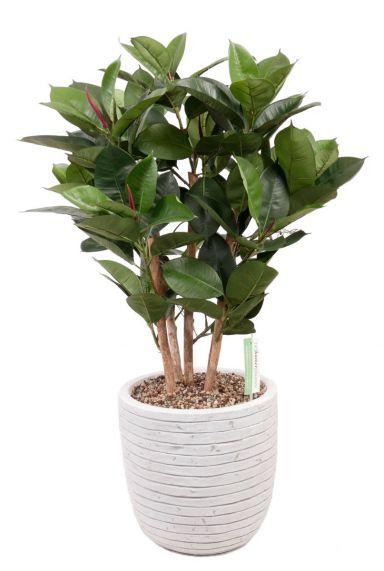 Ficus kunstplant in witte pot