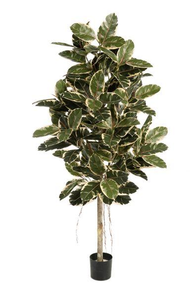 Ficus variagata kunstplant