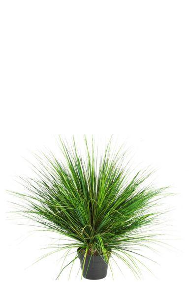 Grasplant kunstplant kopen
