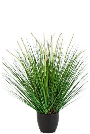 Grasplant zijdeplant