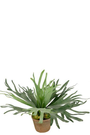 Hertshoornvaren kunstplant 1