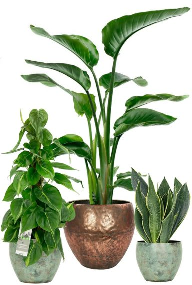 Hippe planten in metalen pot