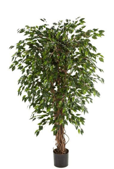 Hoge kunstboom ficus