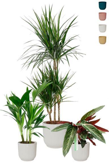 Kamerplanten in witte potjes 1 1