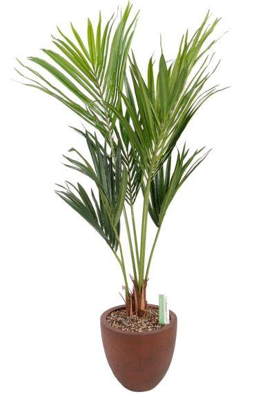 Kentia kunstplant in bruine plantenbak