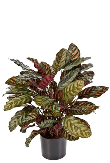 Kunstplant calathea 1