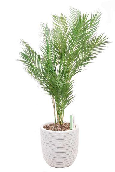 Kunstplant palm in pot 1