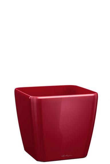 Lechuza quadro rood