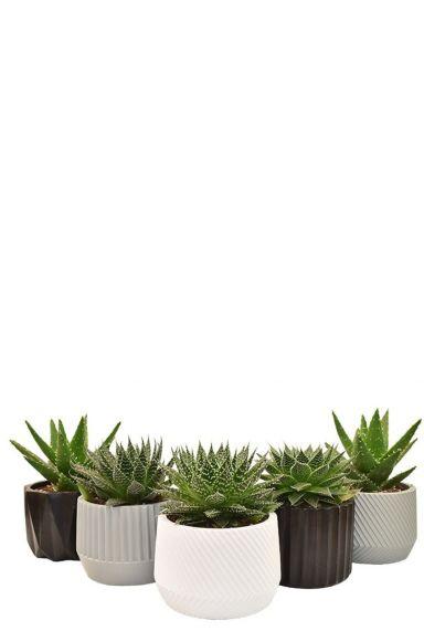 Makkelijke plantjes in pot