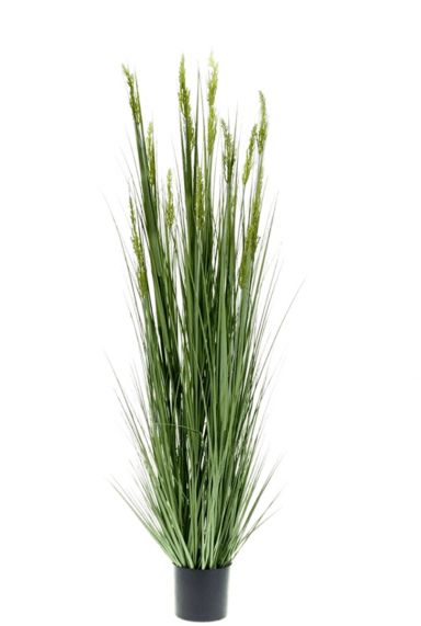 Mooie kunstplant gras
