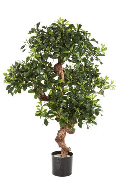 Pittosporum kunstplant zijdeboom
