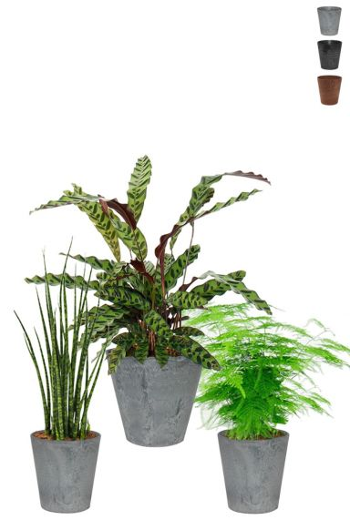 Planten in artstone potten