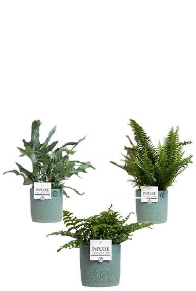 Planten in blauwe pot