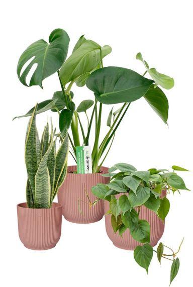 Planten in roze elho pot 1