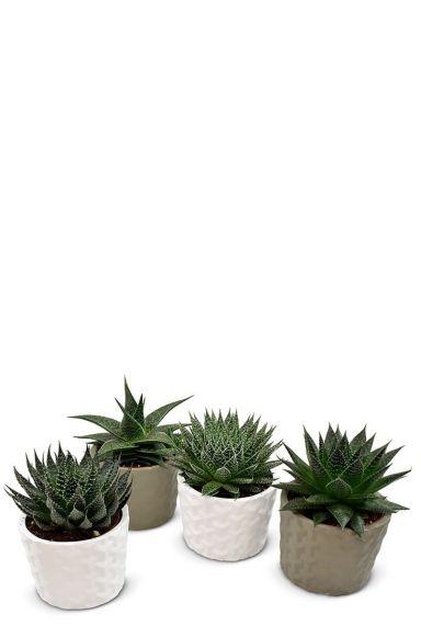 Plantenmix kleine plantjes