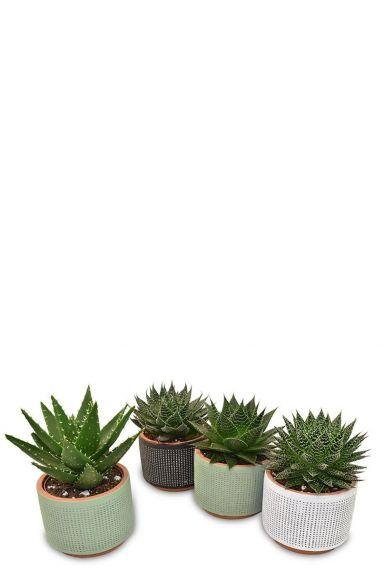 Plantjes in potjes