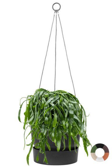 Rhipsalis in hangpot elho greenville