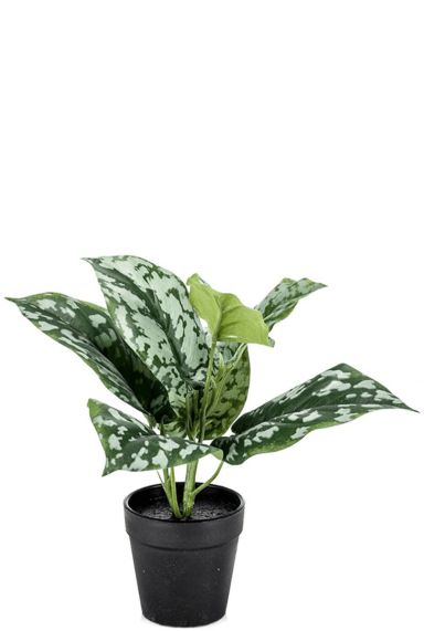 Scindapsus pictus kunstplant