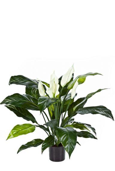 Spathiphyllum met kunstbloemen