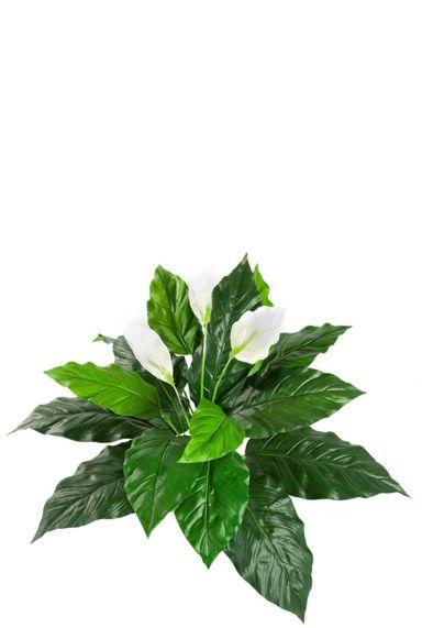 Spathiphyllum zijdeplant