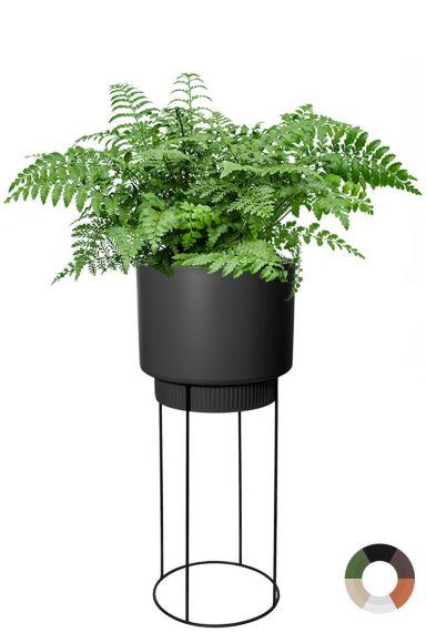 Varen in hoge plantenbak 1