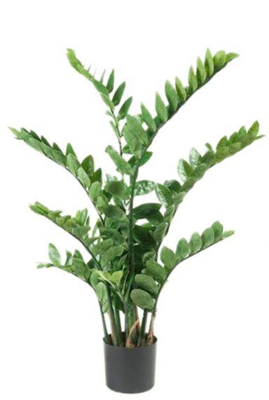 Zamioculcas zijdeplant