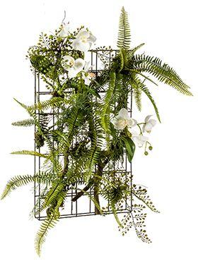 Fern/orchid