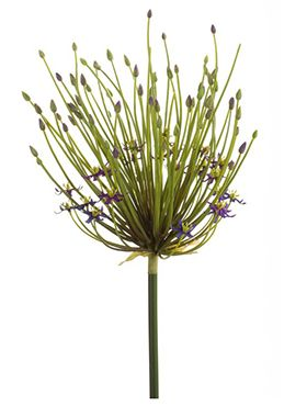 Allium double flower spray