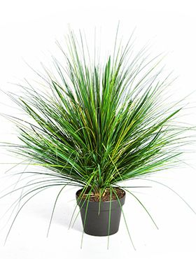 Grass onion