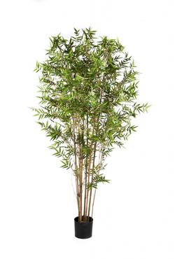Japanese oriental bamboo