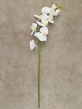 Phalaenopsis spray