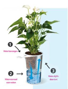 Aqua for Weeks waterpot