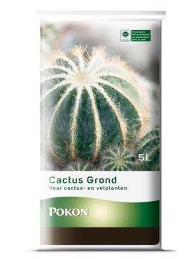 Cactus potgrond