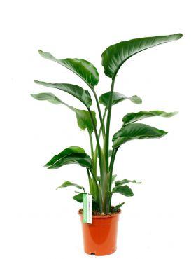 Fabulous Kamerplanten voor in de volle zon kopen? - 123planten.nl &CZ96