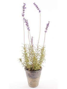 Lavender patio