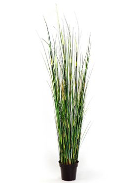 Bamboo wild grass