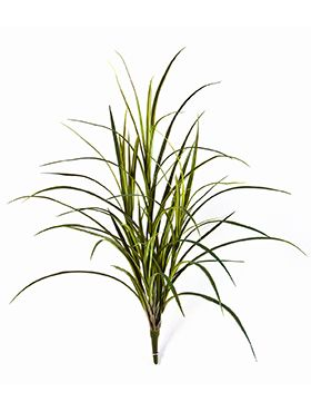 Naturel Grass