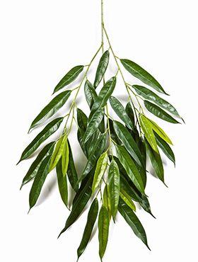 Royal longifolia spray